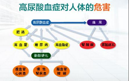 郑州治疗高尿酸血症医院讲述尿酸过高的危害有哪两点?